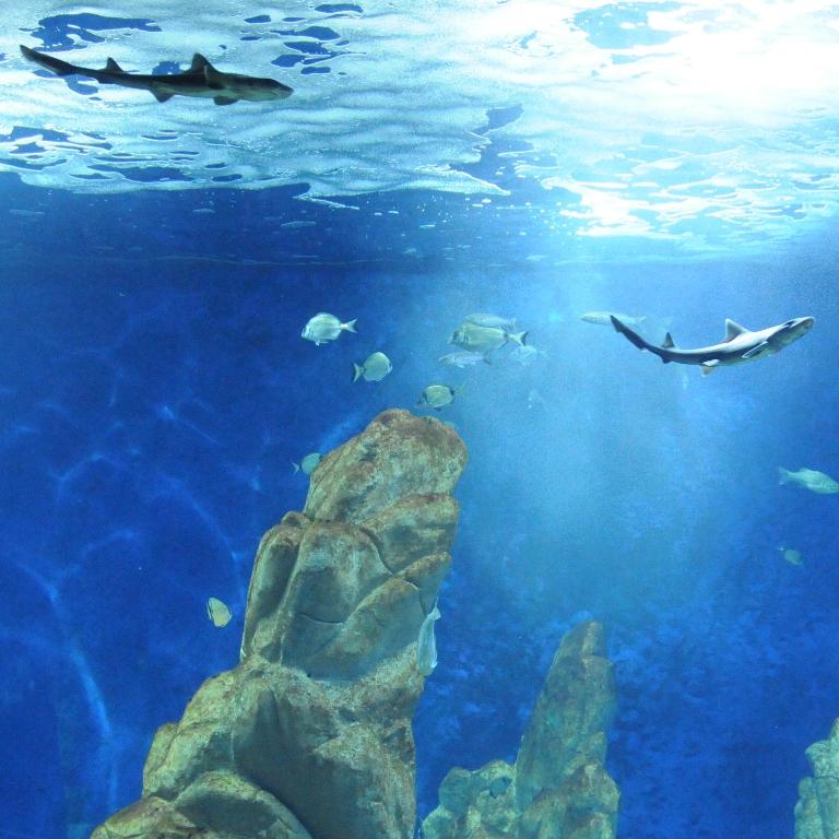 La vasca del mare aperto acquario cala gonone l for Acquario aperto